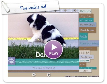 Click to play this Smilebox slideshow: Five weeks old