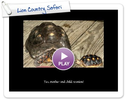 Click to play this Smilebox slideshow: Lion Country Safari