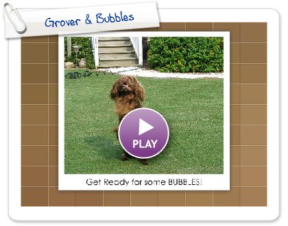 Click to play this Smilebox slideshow: Grover & Bubbles