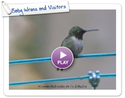 Click to play this Smilebox slideshow: Baby Wrens and Visitors