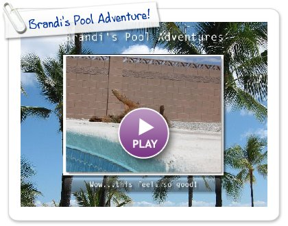 Click to play this Smilebox slideshow: Brandi's Pool Adventure!