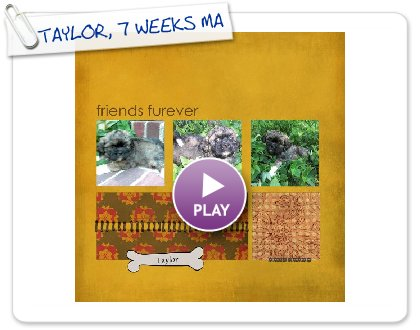 Click to play this Smilebox scrapbook: TAYLOR, 7 WEEKS MAZIE'S