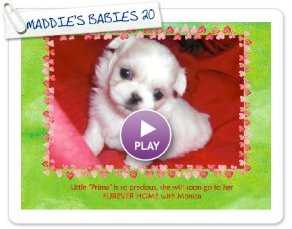 Click to play this Smilebox greeting: MADDIE'S BABIES 2009