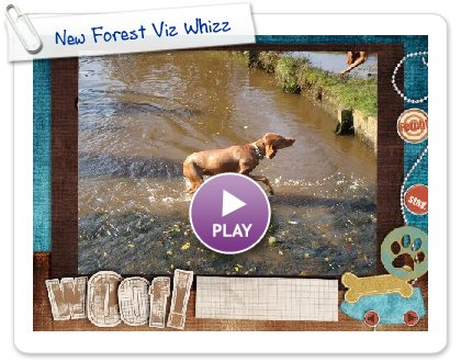 Click to play this Smilebox slideshow: New Forest Viz Whizz