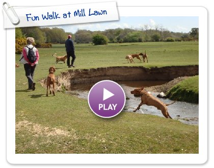 Click to play this Smilebox slideshow: Fun Walk at Mill Lawn