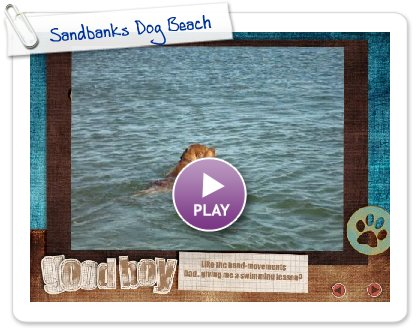 Click to play this Smilebox slideshow: Sandbanks Dog Beach