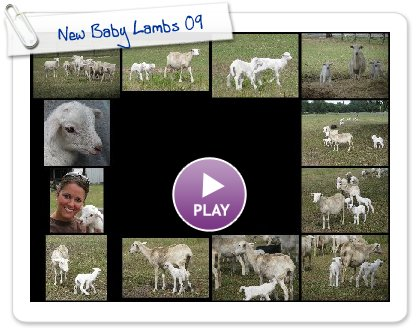 Click to play this Smilebox slideshow: New Baby Lambs 09