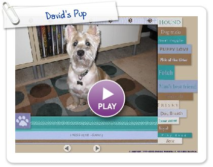 Click to play this Smilebox slideshow: David's Pup