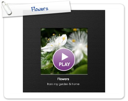 Click to play this Smilebox photobook: Flowers