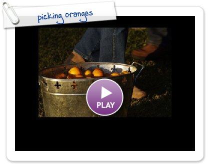 Click to play this Smilebox slideshow: picking oranges