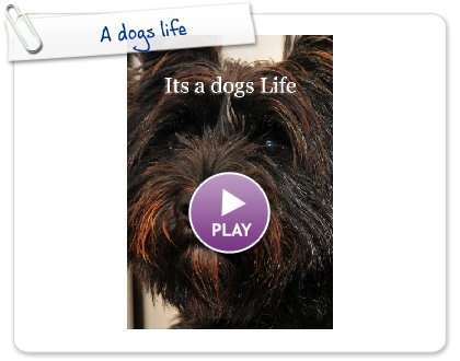 Click to play this Smilebox photobook: A dogs life