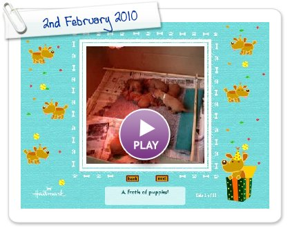 Click to play this Smilebox slideshow: 2nd February 2010