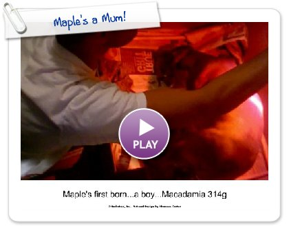 Click to play this Smilebox collage: Maple's a Mum!