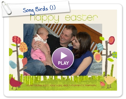 Click to play this Smilebox slideshow: Song Birds