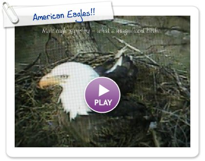 Click to play this Smilebox slideshow: American Eagles!!