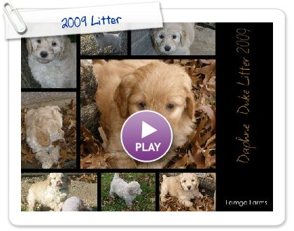 Click to play this Smilebox collage: 2009 Litter