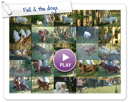 Click to play this Smilebox slideshow: Fall & the dogs