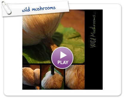 Click to play this Smilebox collage: wild mushrooms