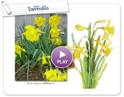 Click to play this Smilebox greeting: Daffodils