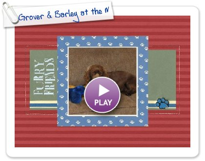 Click to play this Smilebox scrapbook: Grover & Barley at the Match