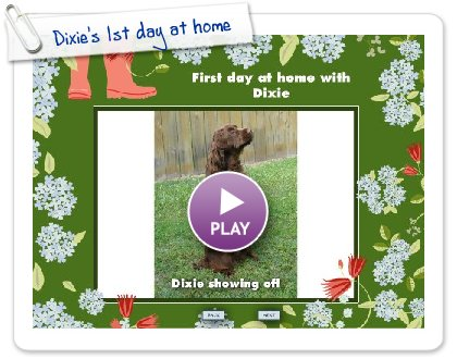Click to play this Smilebox slideshow: Dixie's 1st day at home