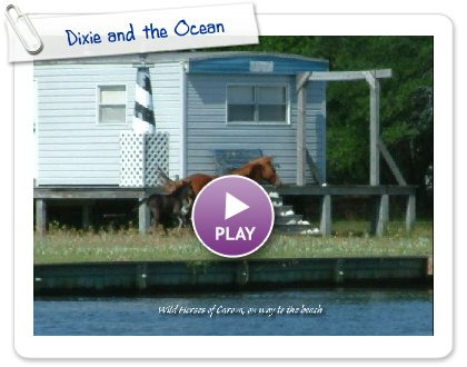 Click to play this Smilebox slideshow: Dixie and the Ocean