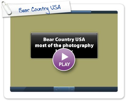 Click to play Bear Country USA