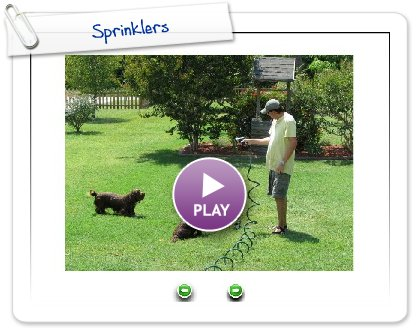 Click to play this Smilebox slideshow: Sprinklers