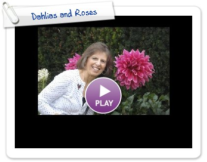 Click to play Dahlias and Roses