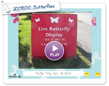 Click to play 20081010_Butterflies