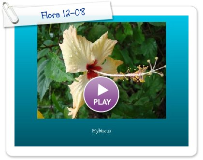 Click to play Flora 12-08