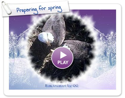 Click to play Preparing for spring