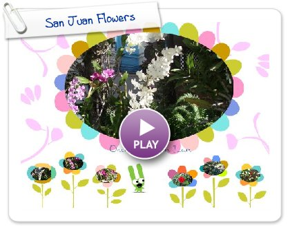 Click to play this Smilebox postcard: San Juan Flowers
