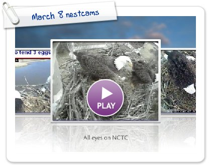 Click to play this Smilebox slideshow: March 8 nestcams