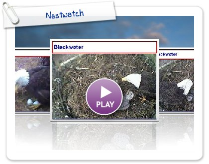 Click to play this Smilebox slideshow: Nestwatch