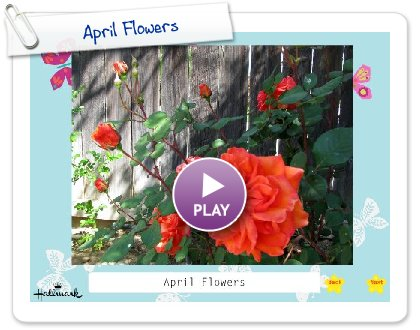 Click to play this Smilebox slideshow: April Flowers