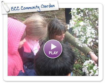 Click to play this Smilebox slideshow: BCC Community Garden