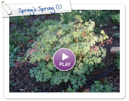 Click to play this Smilebox slideshow: Spring's Sprung