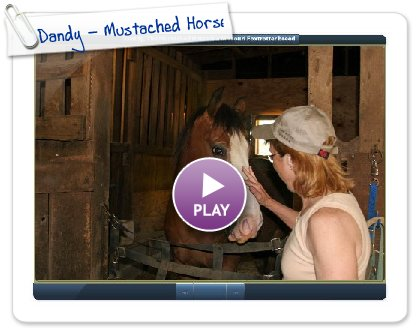 Click to play this Smilebox slideshow: Dandy - Mustached Horse
