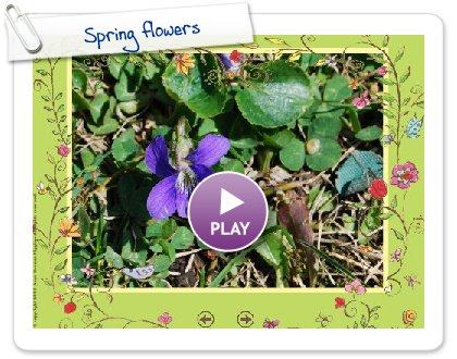 Click to play this Smilebox slideshow: Spring flowers