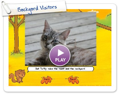 Click to play this Smilebox slideshow: Backyard Visitors