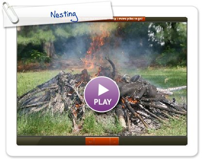 Click to play this Smilebox slideshow: Nesting
