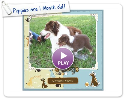 Click to play this Smilebox scrapbook: Puppies are 1 Month old!