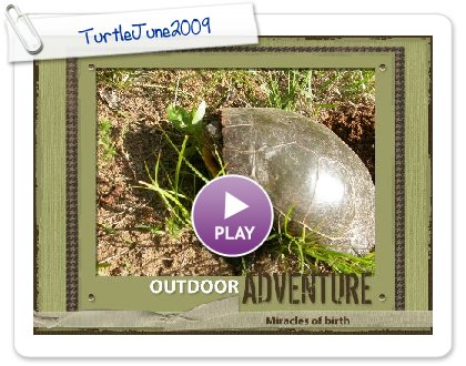 Click to play this Smilebox scrapbook: TurtleJune2009