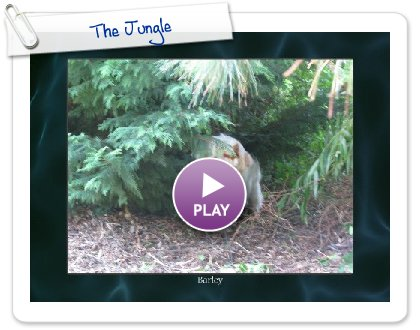 Click to play this Smilebox slideshow: The Jungle