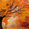 Autumn Canopy - Slideshow